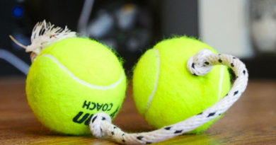 Best 15 Dog Toys You Wanna Get For Your Dog!