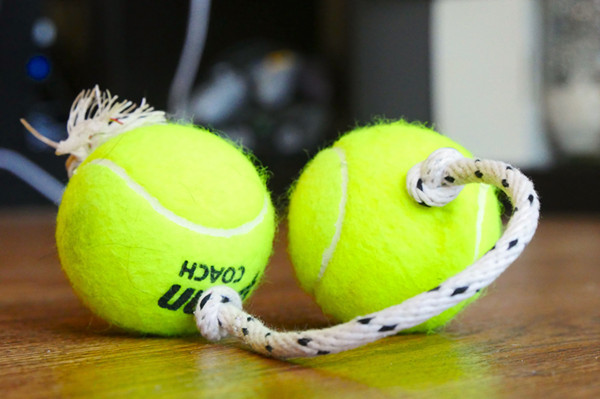DIY dog toys you make in minutes.