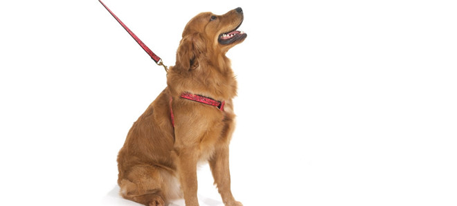 dog-harness-ideas-for-large-dog-puppy_009