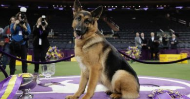 Westminster Dog Show : Breed, winners, Best pics in Show