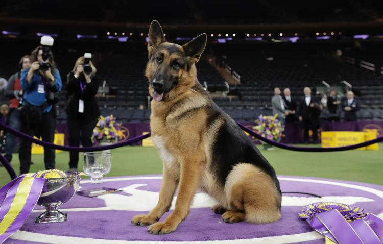 Westminster Dog Show Breed Winners