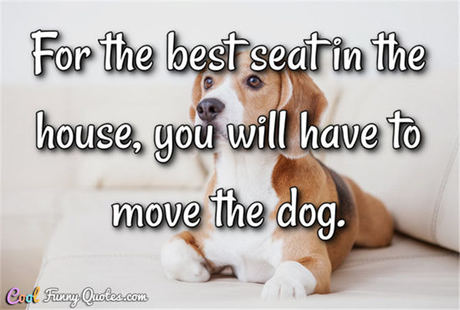 30+ Best Heart-melting Dog Quotes with Beautiful Images | FallinPets