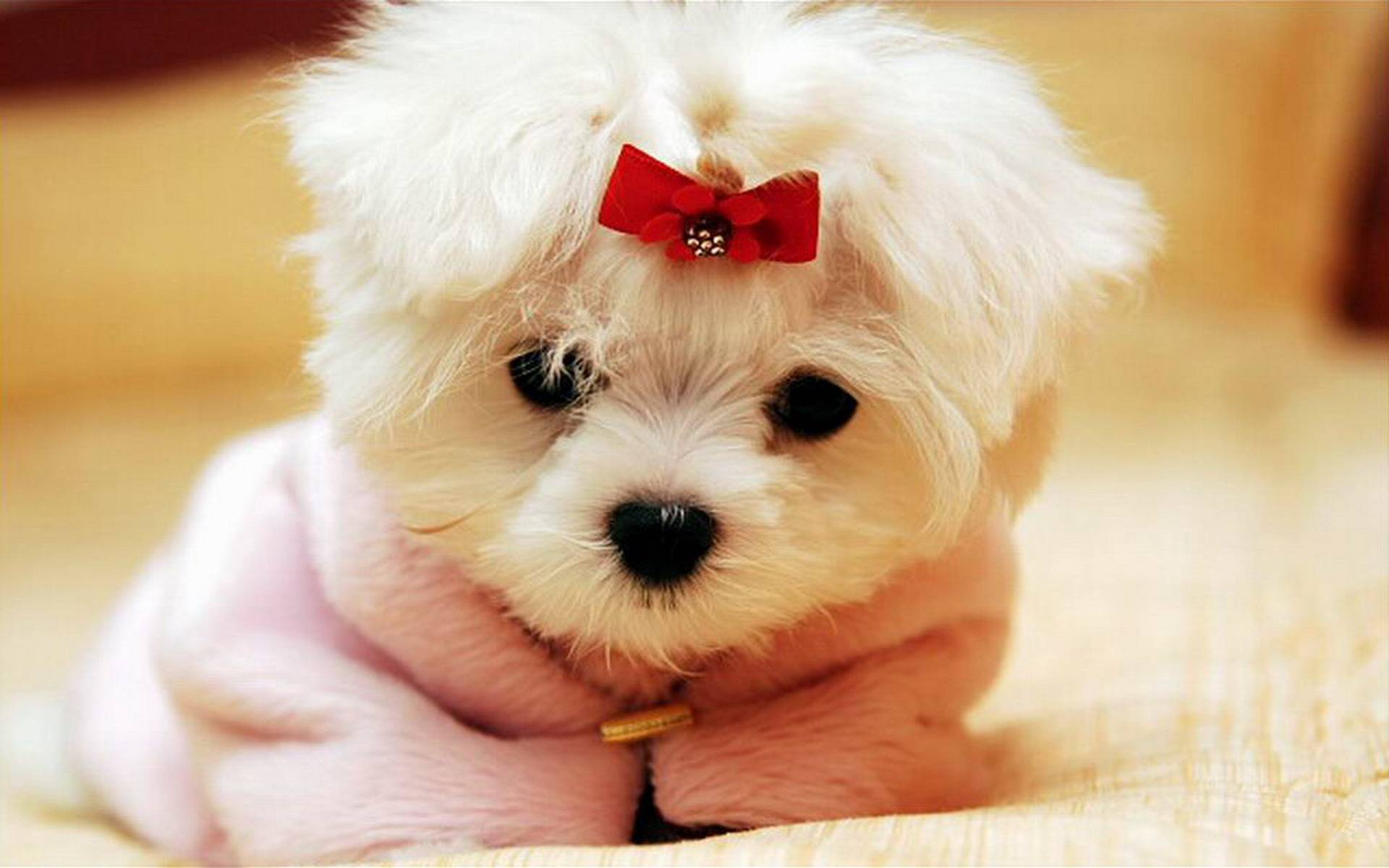 35 Cutest Dog Photo Ideas That're So Darn Adorable ...