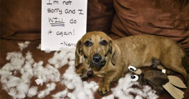 The 40+ Most Popular Dog Shaming Shenanigans For Their Crimes