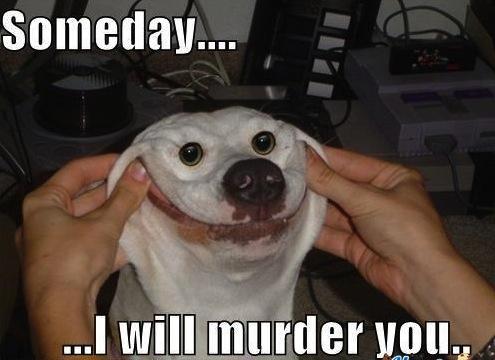 dog-memes_