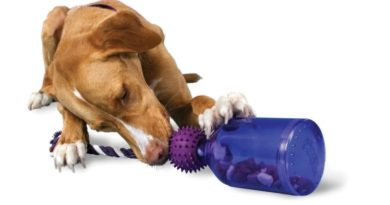 30 Really Cool Dog Toys Your Dog Will Love !