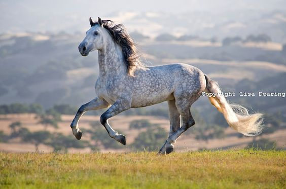 horse-andalusian-stallion-horses-wild-horses-and-equine-fine-art-photography