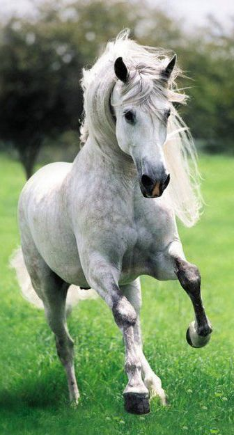 Horse breeds paint horse quarter best horse breeds largest horse arabian horse big and small horse clydesdale horse friesean horse palomino horse breyer horse etc.