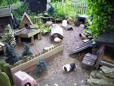 meerschweinchen-aussengehege-guinea-pig-outside-enclosure-this-is-the-best-i-wish-every-guinea-pigs-life-could-look-like-this
