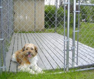 20-best-outdoor-dog-kennel-ideas-14