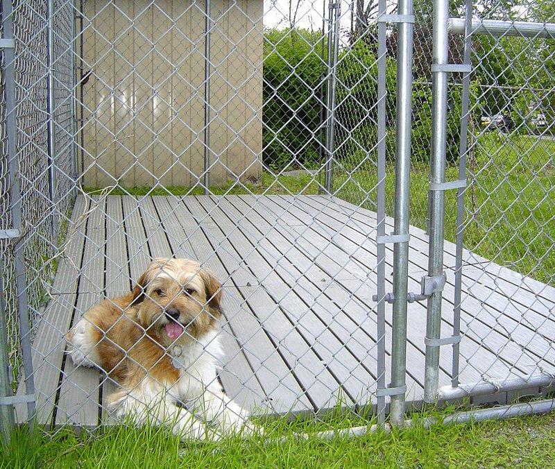 20-best-outdoor-dog-kennel-ideas-14