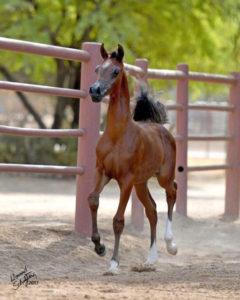 amazing-horses-photos-on-pinterest2017_khalif-af_0976