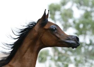 amazing-horses-photos-on-pinterestel-rey-magnum-rcf