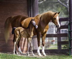 amazing-horses-photos-on-pinterestmadamoiselleandfilly_h3h7231