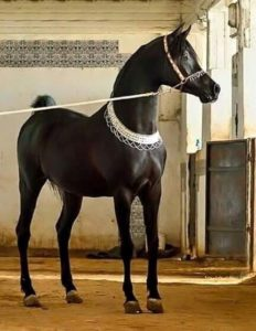 amazing-horses-photos-on-pintereste4f4d67bbdf32c167261b26f3a384eaa