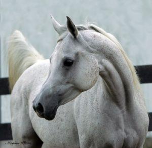 amazing-horses-photos-on-pinterestfalaah2007