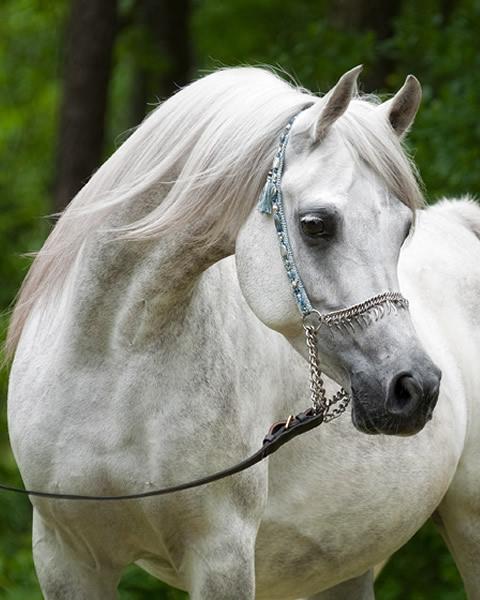 Amazing-horses-photos-on-pinterestkestrailia