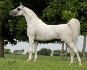 amazing-horses-photos-on-pinterestmain-qimg-b706e90605a08d8d102e96b18edd25ee-c