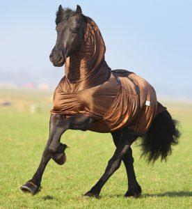 beautiful-black-friesian-what-a-pretty-shiny-black-coat6005_scenic