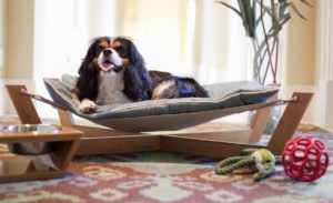 dog-bed-ideas-for-your-furry-friend-10