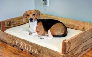 dog-bed-ideas-for-your-furry-friend-19