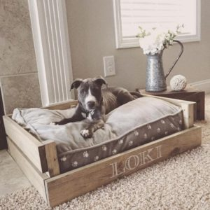 dog-bed-ideas-for-your-furry-friend-8