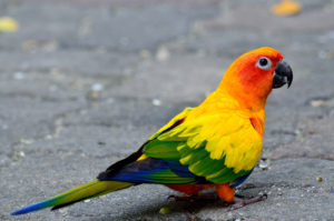 hq-quality-cute-parakeet-photosparakeet-bird