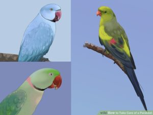 hq-quality-cute-parakeet-photosaid20329-v4-728px-take-care-of-a-parakeet-step-1-version-5
