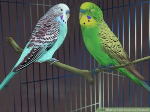 hq-quality-cute-parakeet-photosaid20329-v4-728px-take-care-of-a-parakeet-step-13-version-5