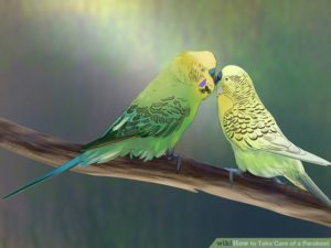 hq-quality-cute-parakeet-photosaid20329-v4-728px-take-care-of-a-parakeet-step-4-version-5