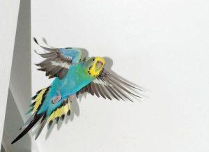 hq-quality-cute-parakeet-photosmain-qimg-6276a19265b60e93ae9fc2f24a89c99a-c