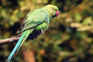 hq-quality-cute-parakeet-photostypes-of-parakeets-171089154-resized-58a471f63df78c47585f12cf