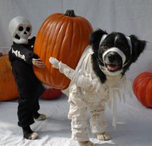 halloween-dog-costume-ideas_10