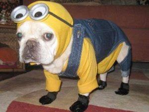 halloween-dog-costume-ideas_11