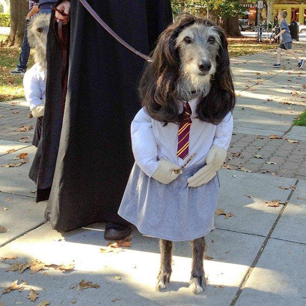 halloween dog costume ideas 12 fallinpets