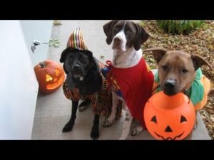 halloween-dog-costume-ideas_13