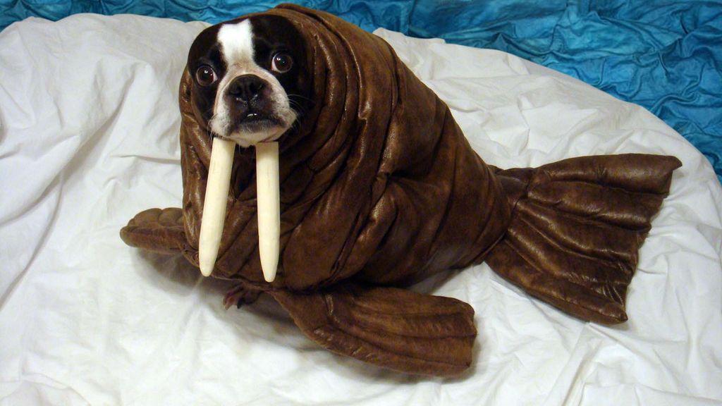 halloween dog costume ideas_15