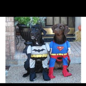 halloween-dog-costume-ideas_16