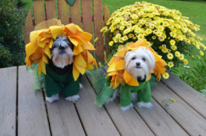 halloween-dog-costume-ideas_17