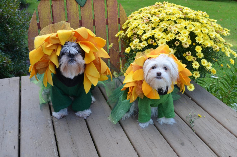 halloween dog costume ideas_17