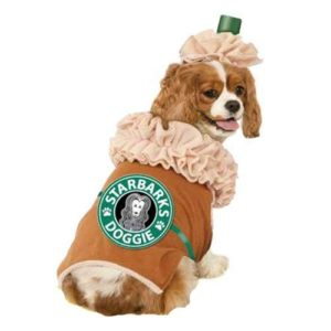 Cute Dog Costumes Top 20 Best Cute Dog Costumes For Halloween Heavy Patricia  - Cute Dog Pictures In The World