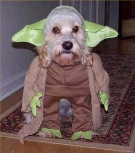 halloween-dog-costume-ideas_21