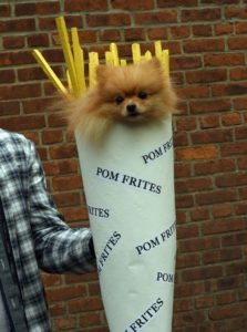 halloween-dog-costume-ideas_22