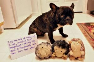 hilarious-dog-shaming-photos-ever_1