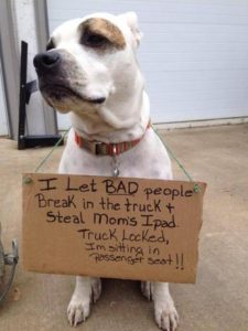 hilarious-dog-shaming-photos-ever_11