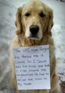 hilarious-dog-shaming-photos-ever_12
