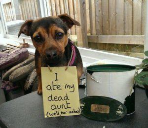 hilarious-dog-shaming-photos-ever_13
