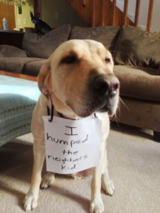hilarious-dog-shaming-photos-ever_14