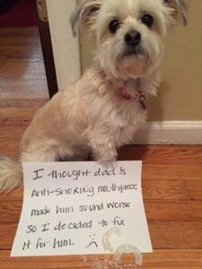 hilarious-dog-shaming-photos-ever_16