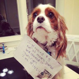 hilarious-dog-shaming-photos-ever_17